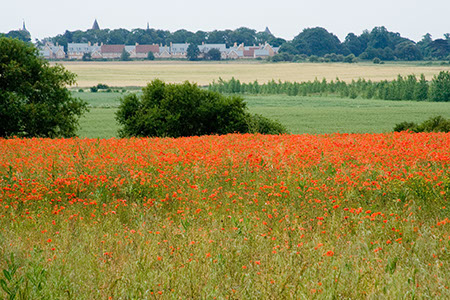 Stotfold Poppy field - Date Taken 25 Jun 2006